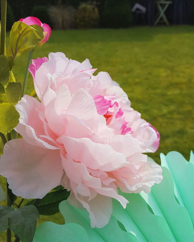 Happy Weekend Colorful Eyephotograpghy Elégance Pastel Colors Pastel Power Pink Color Silkflowers EyeEm Best Shots Check This Out Taking Photos EyeEm Gallery Eyeemflowercollection Flower Collection
