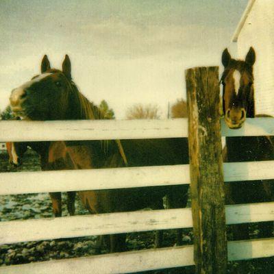 Old Polaroids -- Calendar Pose #trailblazers_rurex #royalsnappingartists #rsa_rural #rsa_country #ig_ruralamerica #ig_republic #rustlord_communitythrive #picture_to_keep #heyfred_lookatthis Horses Royalsnappingartists Rsa_rural Ig_ruralamerica Rsa_country Trailblazers_rurex Heyfred_lookatthis Picture_to_keep Ig_republic Rustlord_communitythrive Rr_renegade_barnyard