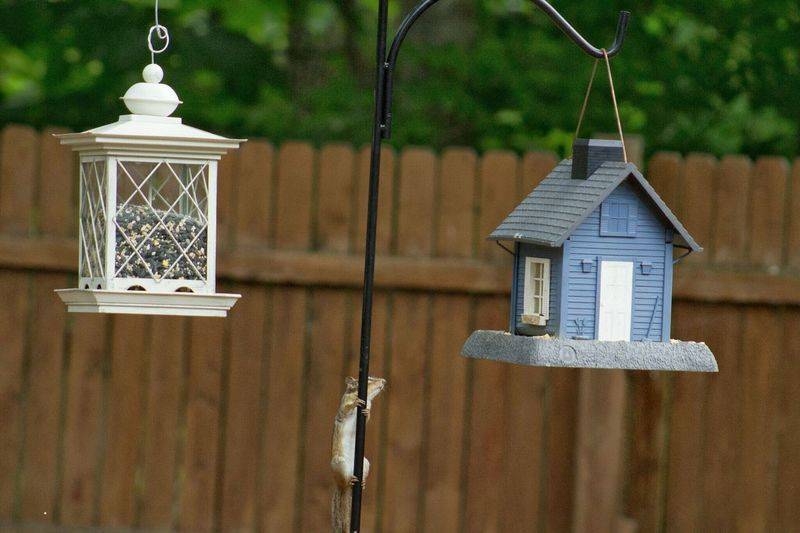 Squirrel on pole amidst birdhouse and feeder