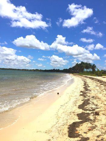 Cuban Beach Playa Larga Beach Sand Shore Nature Tranquil Scene Vacations