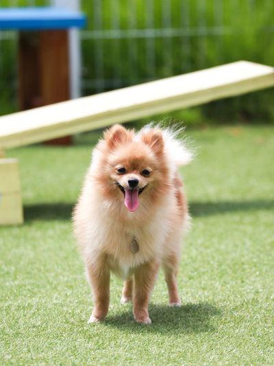 One Animal Mammal Dog Canine Animal Themes Pets Grass No People Animal Cute Playground