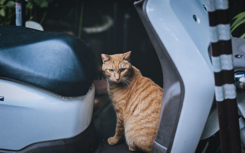 A cat seated on