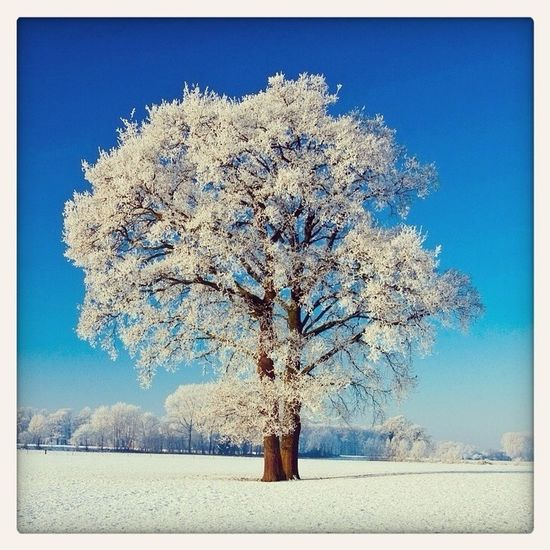 Winterscape with tree between Vorden and Hengelo in the Netherlands
