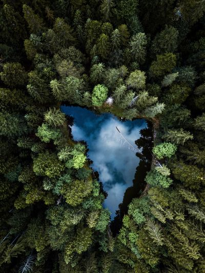 Aerial view of lake and trees in forest