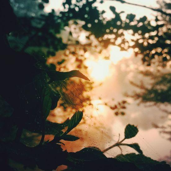 утро сонце паутина