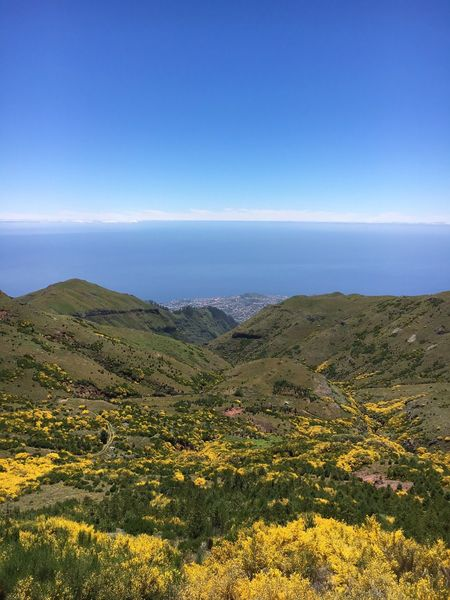 Madeira landscape Yellow Flowers Madeira Island Curral Das Freiras Portugal Brautiful View Madeira Beauty In Nature Nature Tranquil Scene Tranquility Scenics Landscape Idyllic Outdoors No People Sky Blue Plant Travel Destinations EyeEmNewHere