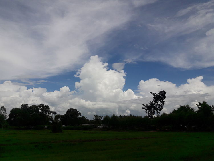 Tree Cloud - Sky No People Sky Nature Outdoors Day Grass Beauty In Nature Freshness