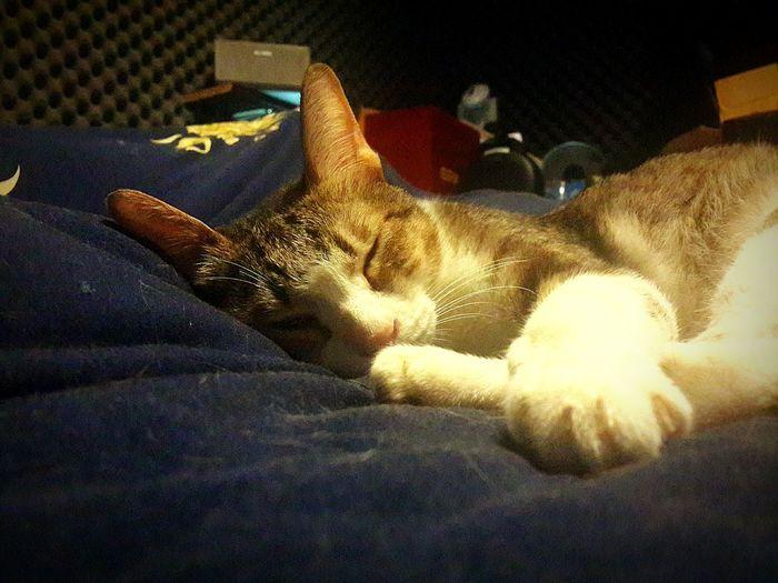 Cat My Cat I Love My Cat I Love Cats Samsung Galaxy S4 Cat Sleeping