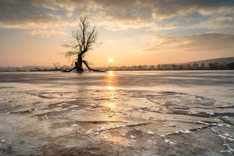 Bare trees on snow covered landscape during sunset