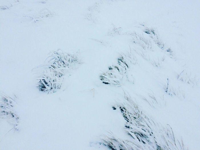 Mauntains Snow Cold Fog Winter Blackandwhite Beautiful Grass