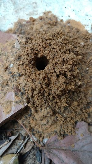 Wasp??? Insectcastle Mound Hole In The Ground Guessing Check This Out