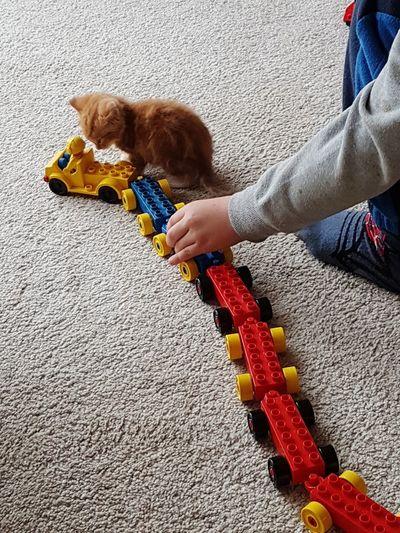 Kitten Ginger