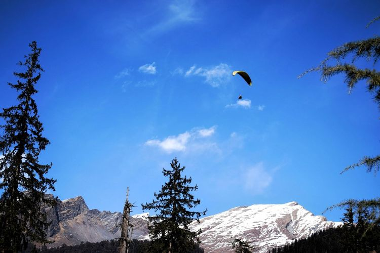 Fly High Paragliding Bird Tree Flying Bird Of Prey Mountain Snow Extreme Sports Adventure Mid-air Spread Wings