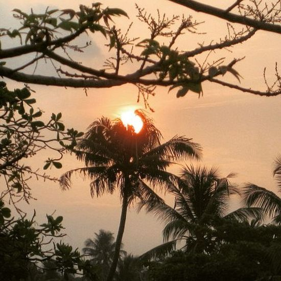 Head on Fire!!! :-P Sunrise Sunray Coconut Tree Fire Headshot Orange Nature Beauty Photography Canon 12MP Zoom Trip BoysTrip Bikeride Bikers Loner Lonleyplanet Dark Shades Colorful Life Enjoy Fun : Sreeni