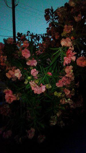 Hello World My Garden Flores Y Más Flores Pink Flower Florecitas