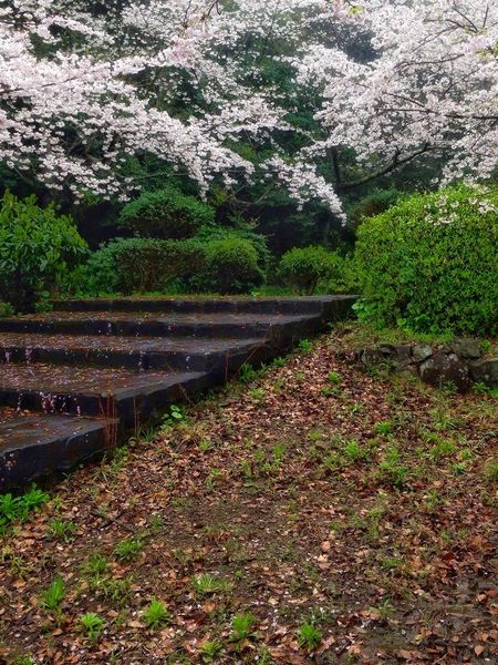 Walking In The Park Early Foggy Spring Morning Nature Tree Growth Tranquil Scene Beauty In Nature Scenics Outdoors No People Day Close-up Saikai City Japan