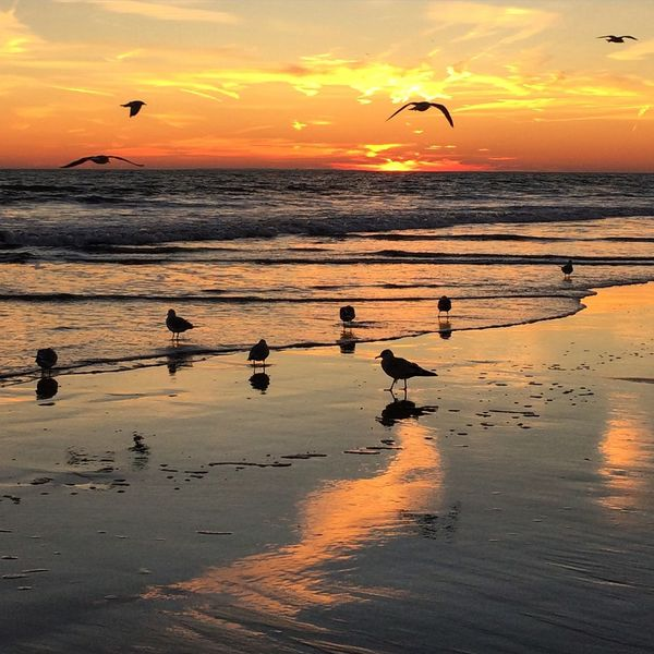 Sunset At Long Beach, NY EyeEm Best Shots Visualmagic Sunset Silhouettes Splendid_reflections Sky Collection Eye Em Nature Lover