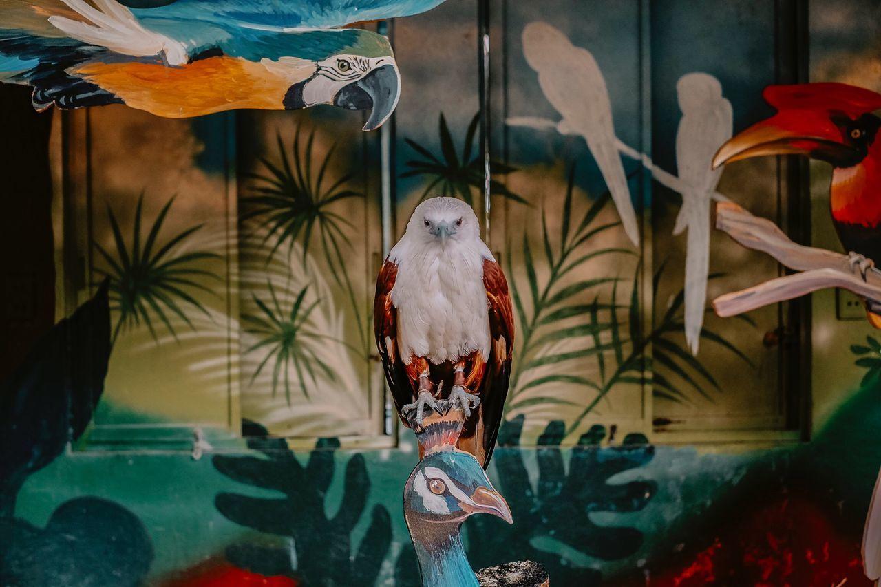 bird, animal themes, animals in the wild, animal wildlife, day