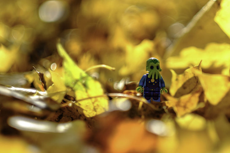 Lottle something. Autumn Autumn Colors Cthulhu Day Fall Beauty Fallen Fallen Leaves Figurine  Jesień Leaves LEGO Lego Minifigures Legophotography Nature No People October Outdoors Poland Statue