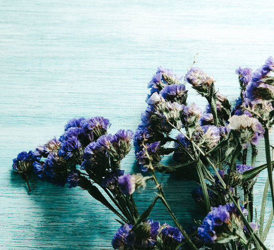 Close-up of purple flowers by sea