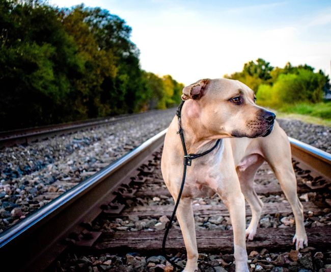Close-up of dog standing on railroad track against sky