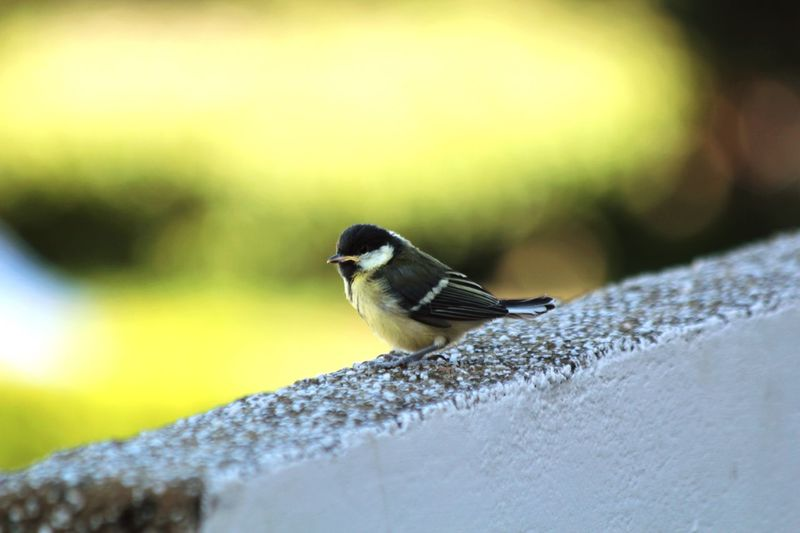 Nature On Your Doorstep Beautiful Nature Fully-fledged Birds Nature Birds_collection