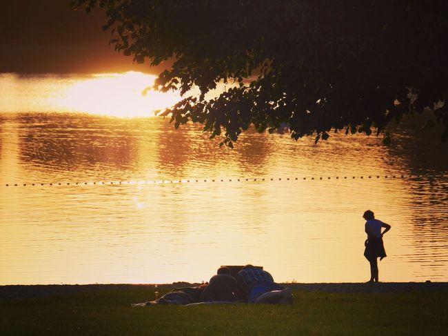 Golden MOMENTS Sunset Silhouette Water Tree Leisure Activity Mondsee Burgenlandkreis Lake Tranquility Sunlight Tadaa Community
