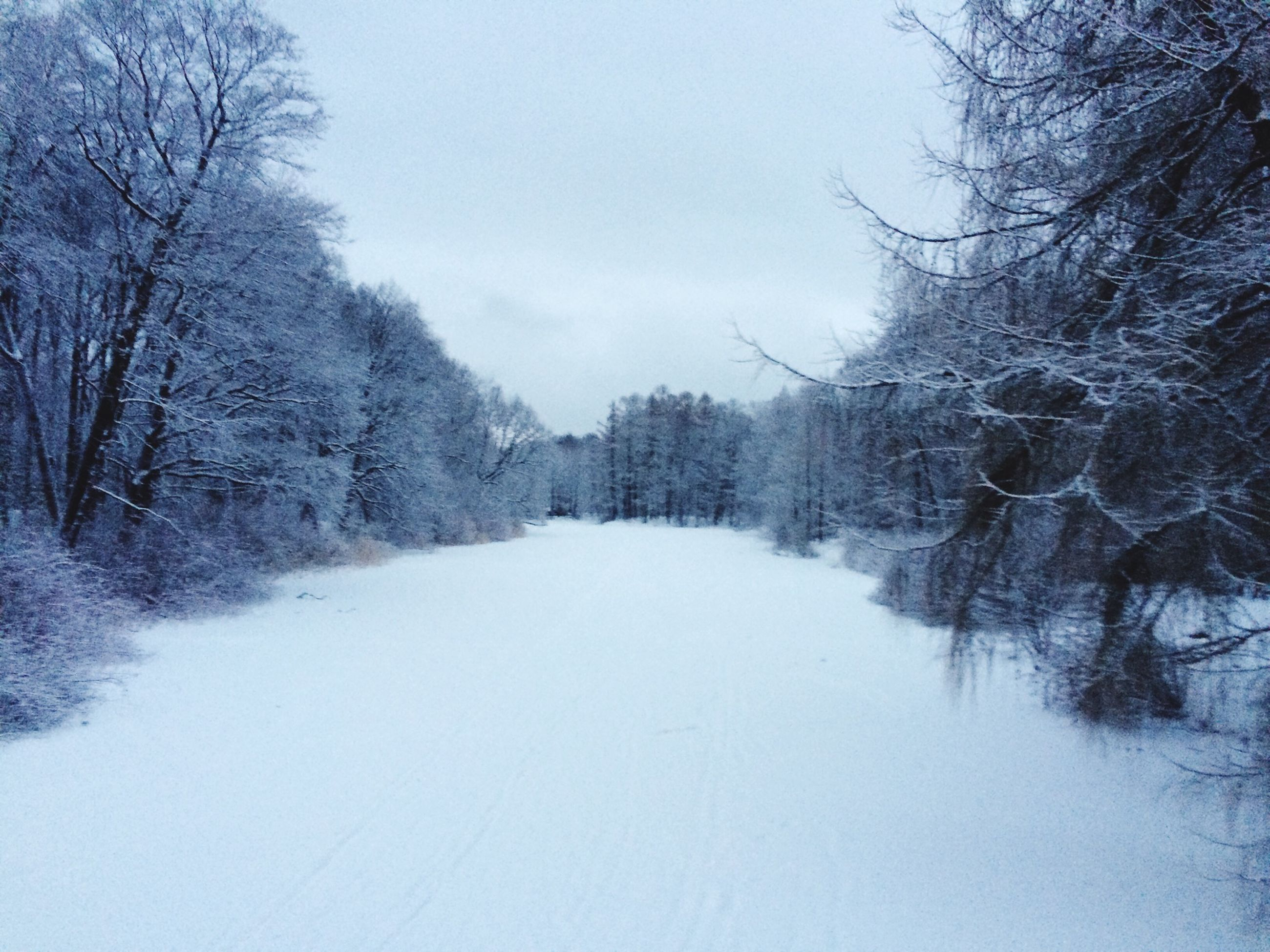 snow, winter, cold temperature, season, weather, tree, bare tree, the way forward, tranquility, tranquil scene, covering, nature, beauty in nature, scenics, frozen, landscape, diminishing perspective, sky, non-urban scene, covered