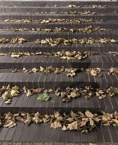 Autumn On The Way