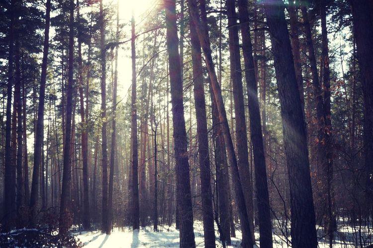Walking Around Taking Photos Hi! Hello World My Photo Ski Forest Enjoying The Sun Winter Nature