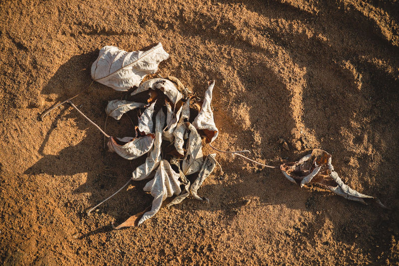 Brown Desert Drought Dry Dry Leaves Earth Outdoors Sand Thirst