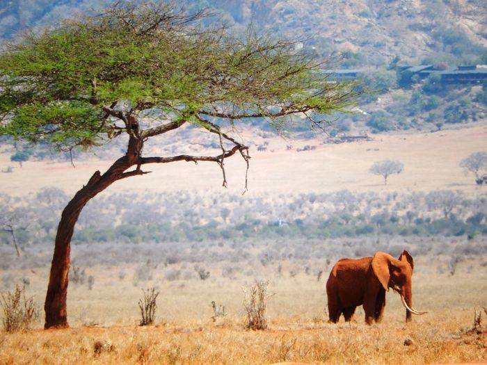 Elephant by tree on field against mountain