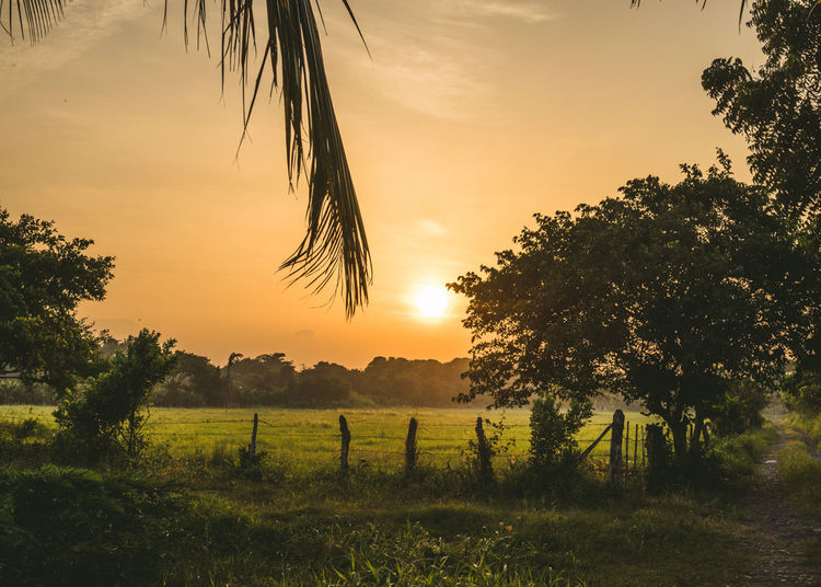 Beauty In Nature Cloud - Sky Field Grass Growth Idyllic Landscape Majestic Nature No People Non Urban Scene Non-urban Scene Orange Color Outdoors Remote Scenics Sky Sun Sunset Tranquil Scene Tranquility Travel Travel Destinations Travel Photography Tree