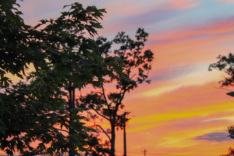 Sunset Sunset Beauty In Nature Tree Outdoors Canonphotography Canon Canon_photos