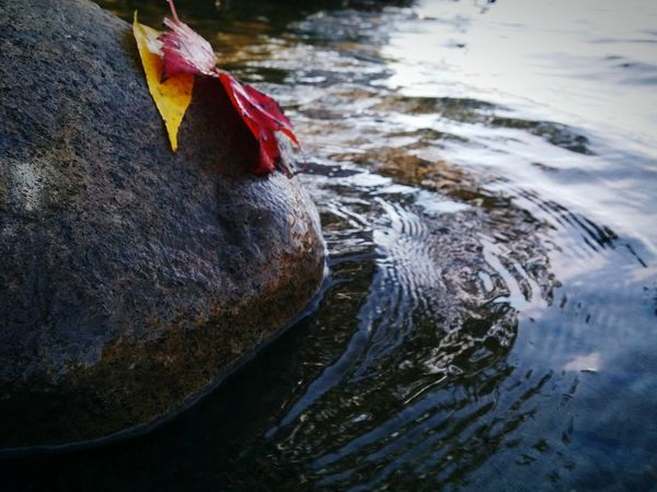 Earth and Water Harmony Autumn🍁🍁🍁 Water Peace And Quiet Nature Harmony One Of My Favorites