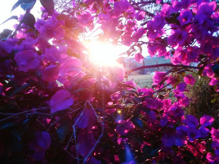 Nature Sun Captured Nature Photography Sunshine Peeking Through Spring Vibrant Beauty In Nature Plant Life