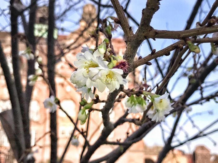 Frost-resistant Flower Tree Branch Blossom Springtime Fragility Apple Blossom Beauty In Nature Nature Growth White Color Orchard Apple Tree Day Freshness No People Outdoors Twig Flower Head Petal