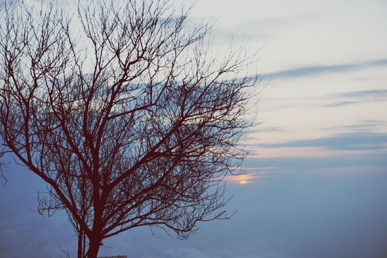 sky, bare tree, nature, beauty in nature, tranquility, branch, low angle view, no people, tree, outdoors, tranquil scene, scenics, cloud - sky, day