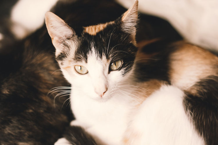 Close-up portrait of a cat at home