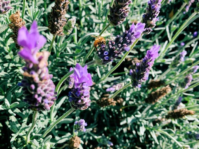 Close-up of insect on purple flowering plant