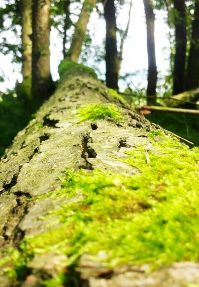 Tree Forest Mossy Tree Mossy Nature Nature On Your Doorstep Natural Beauty Free Spirit Free Time Freshness SIMPLY