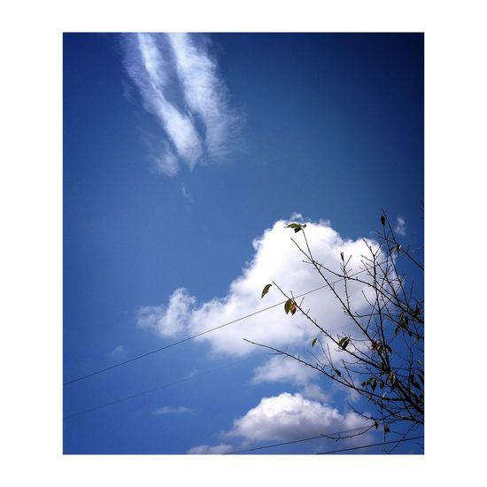 Sky Cloud - Sky Flock Of Birds Outdoors Motion Blue Tree Travelling Photography Beauty In Nature Clear Sky Nature Plant