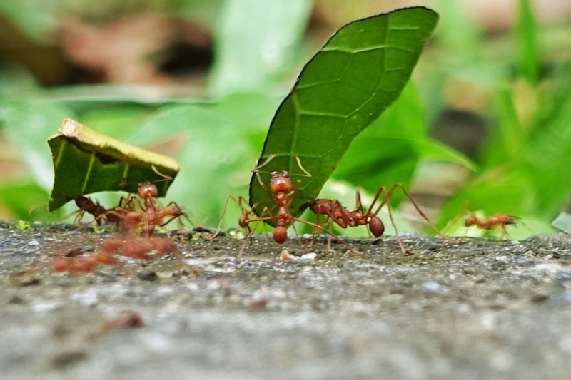 Close-up of ant on leaf
