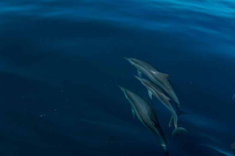 Surrounded by dolphin family.