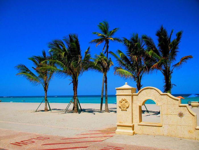Palms by sea