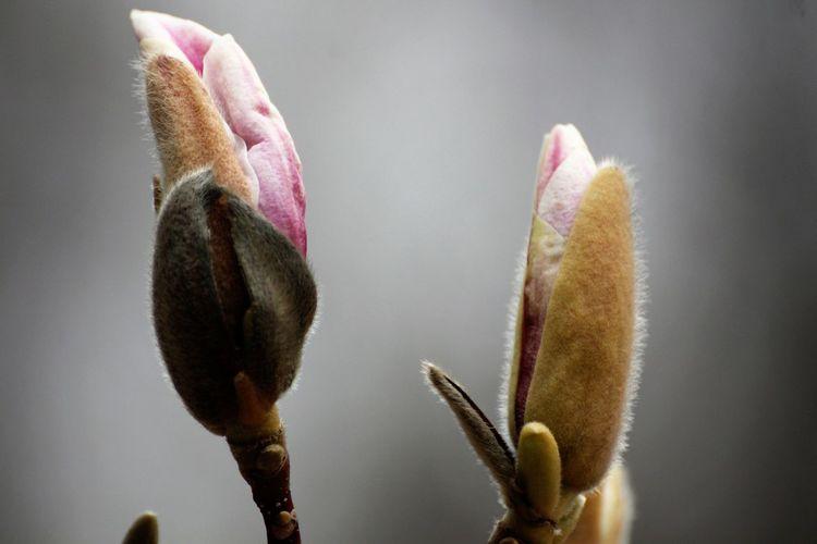 Close-up of flower bud