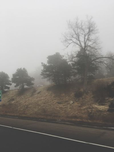 Probably now more than ever Tree Road Nature Fog Tranquil Scene Tranquility Landscape Transportation Scenics Outdoors Day No People Countryside Colorado Cold Commuter Commute Traveler Drive Home