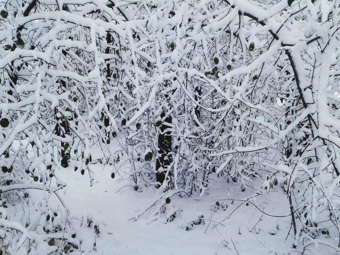 Ice White Color