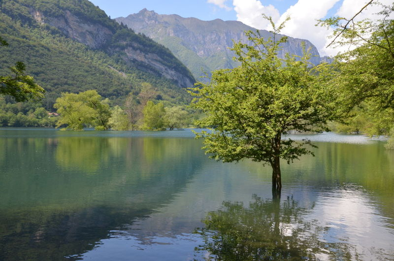 Tree in lago di tenno with reflection against mountains