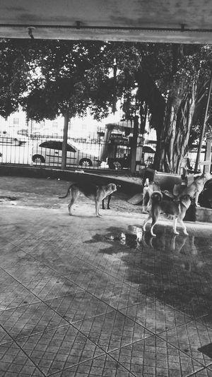 Urban Geometry Dog Street VSCO Cam
